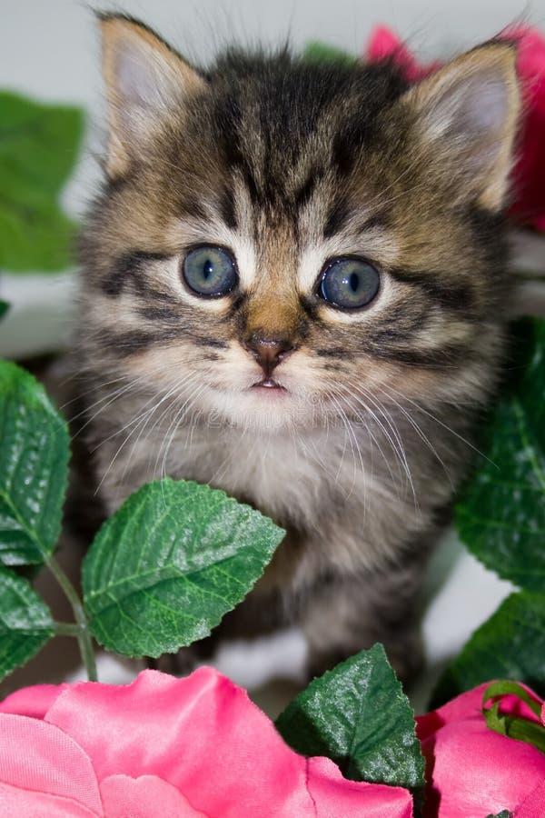 Kitten in flowers. stock photos