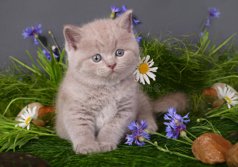Kitten in flowers stock photo