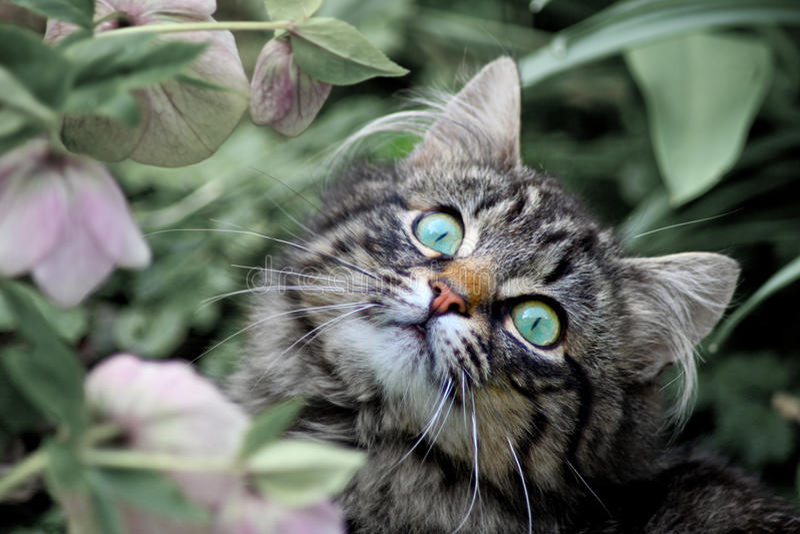 Kitten and flowers. Kitten and soft muted garden flowers