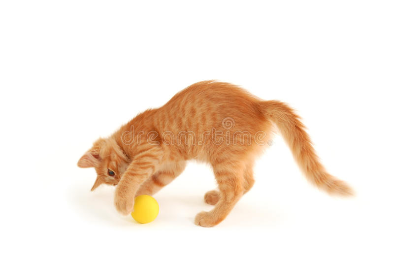 Kitten funny red catch ball. Isolated on white background stock images