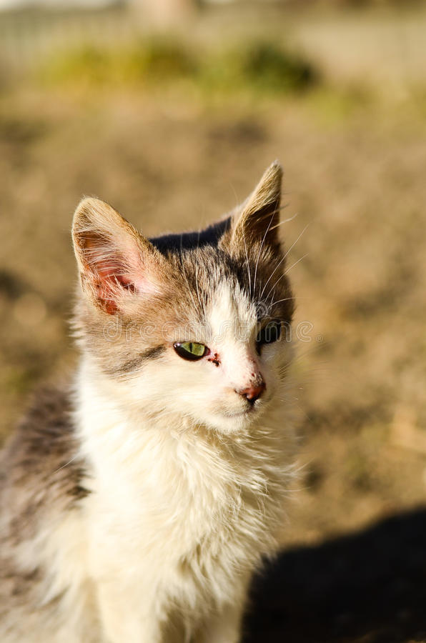 Download Kitten in a garden stock photo. Image of adorable, home - 83718844