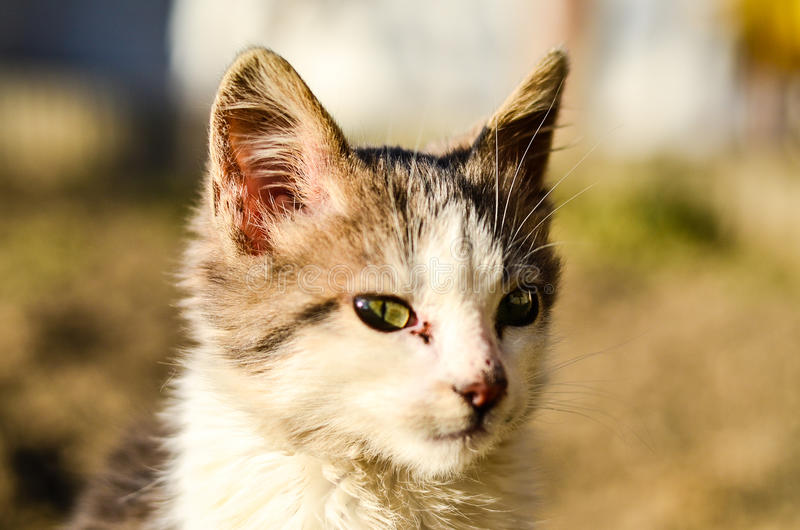Download Kitten in a garden stock image. Image of domestic, grooming - 83717757