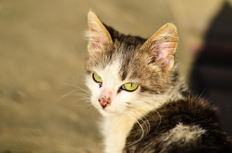 Download Kitten in a garden stock photo. Image of amazing, field - 83718458