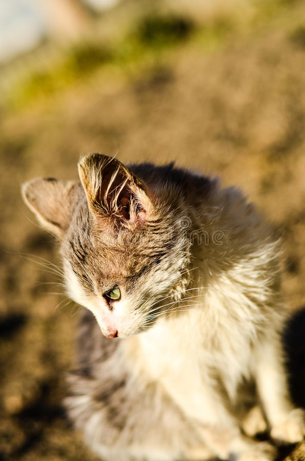 Download Kitten in a garden stock photo. Image of compassion, charming - 83718504