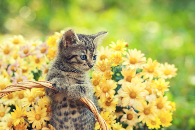 Kitten in the garden with flowers. Little kitten in the garden with flowers on background