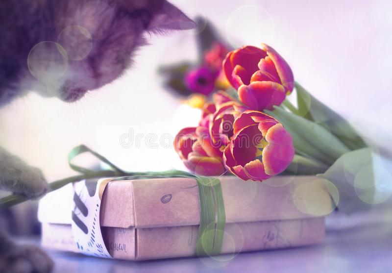 Kitten with gift box and flowers stock photography