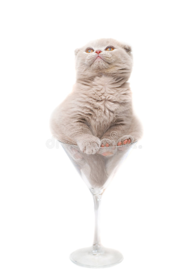 Kitten in a glass. Isolated stock photos