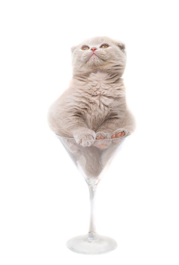 Kitten in a glass. stock photos