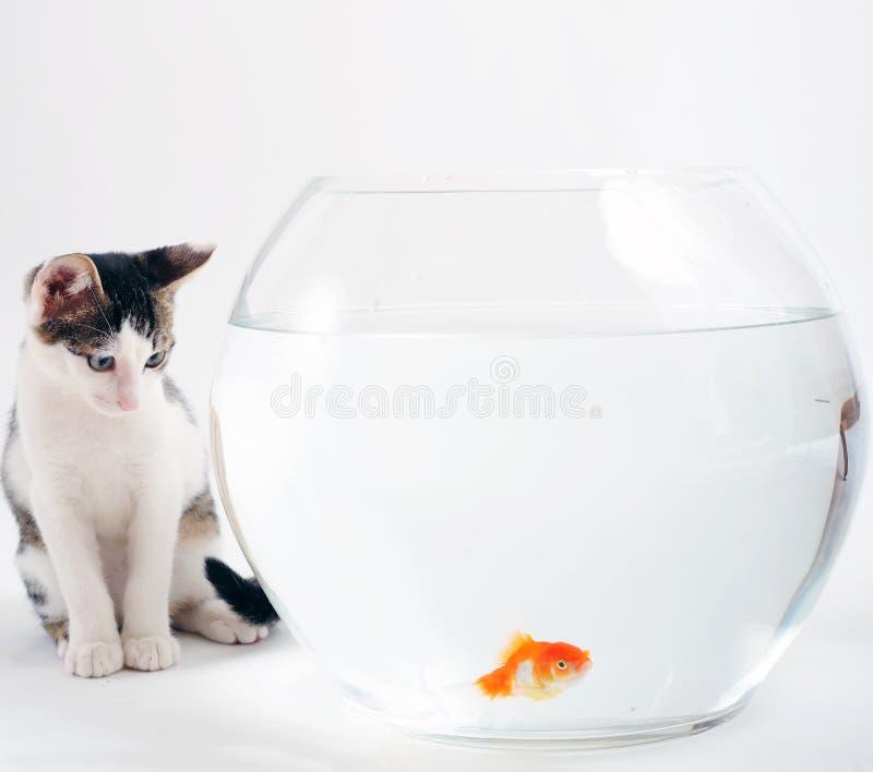 Download Kitten and goldfish stock photo. Image of fishbowl, temptation - 6676022