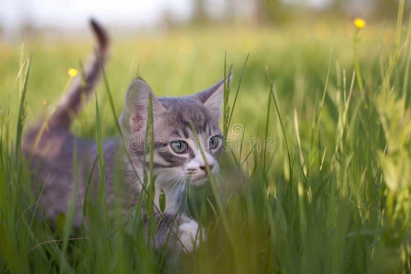 Kitten in grass stock photos