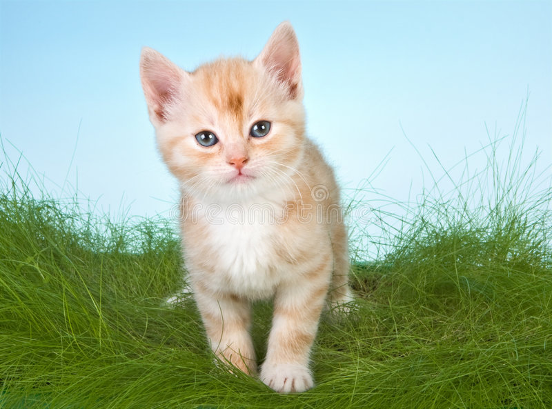 Kitten in grass stock photography