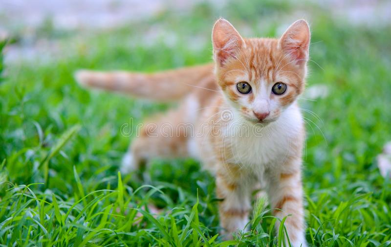 Kitten on grass royalty free stock image
