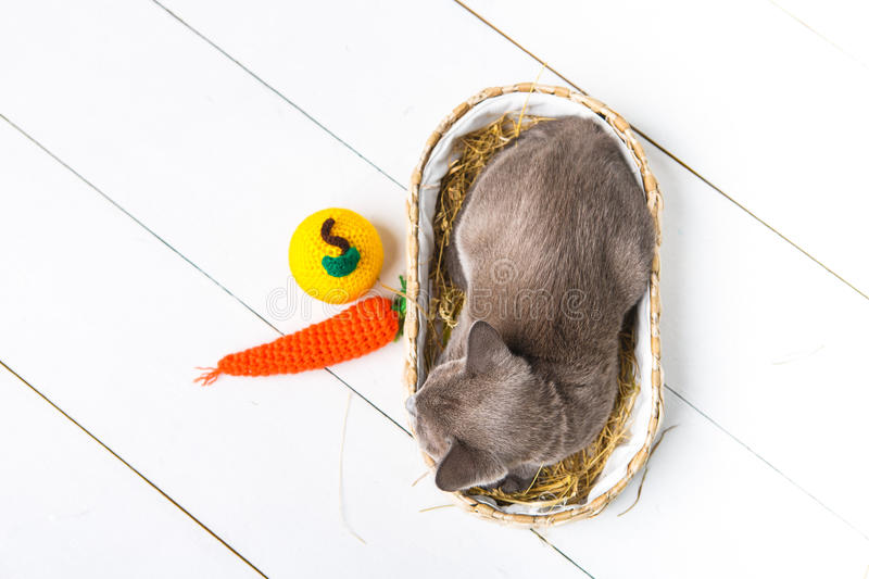 kitten gray breed, the Burmese is sitting in a wicker basket. Next toy crocheted in the form of fruit. wooden background. stock photography