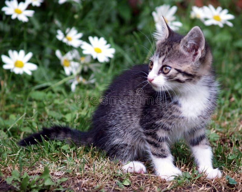 Kitten on green field stock photos