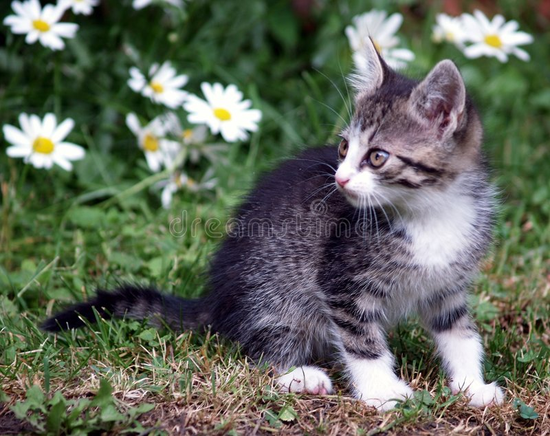 Kitten on green field. Cute kitten playing on green field stock photos