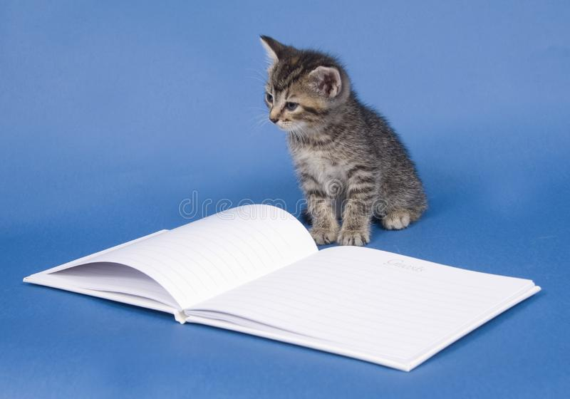 Kitten with guest book stock photo