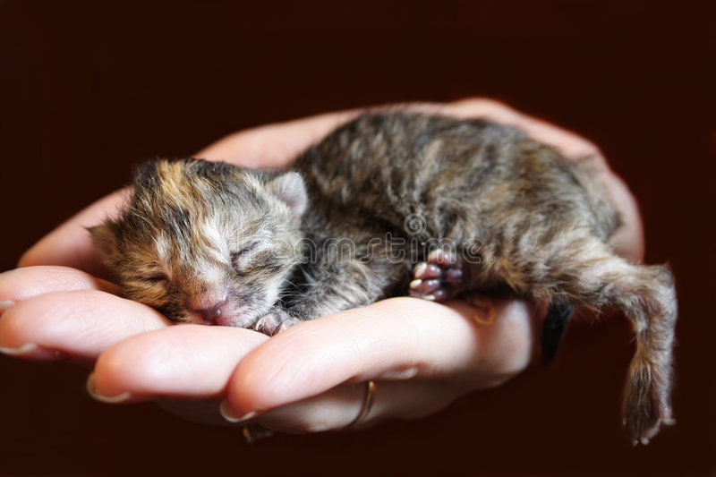 Kitten on a hand royalty free stock images