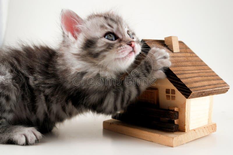 Kitten has real estate. Kitten hold a model house royalty free stock photo