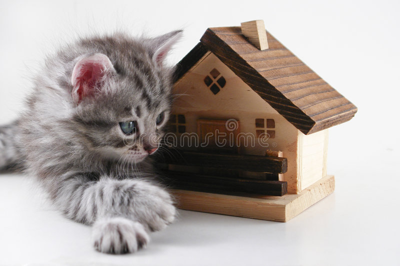 Kitten has real estate. Kitten lays in front of a model house royalty free stock photography
