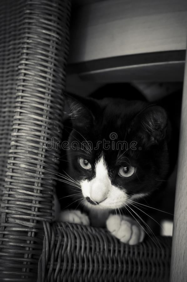 Download Kitten hiding stock photo. Image of face, chair, mammal - 13567474