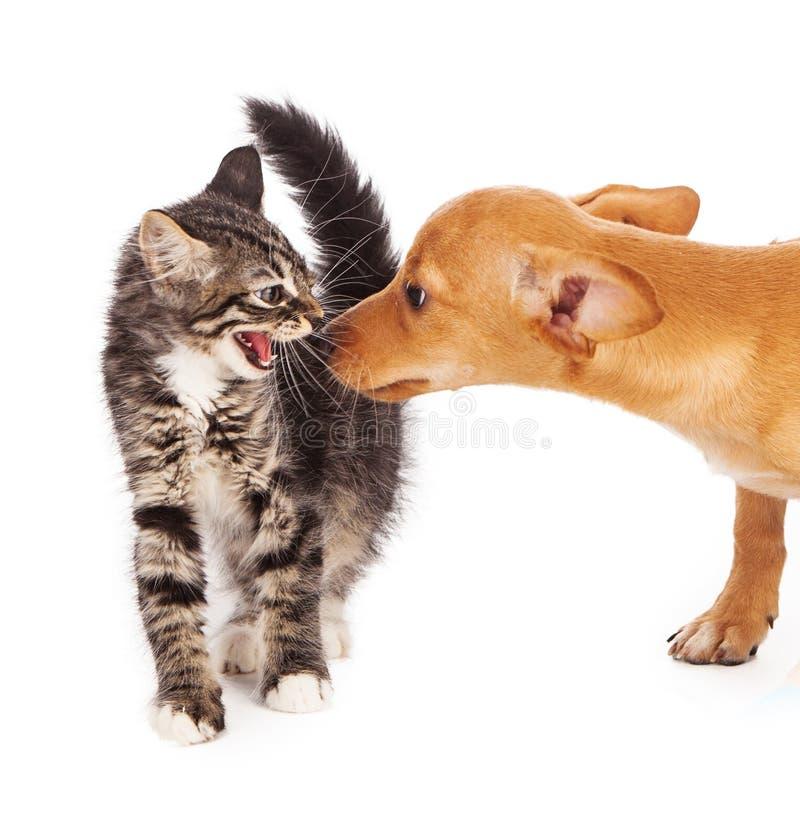Kitten hissing at puppy royalty free stock photo