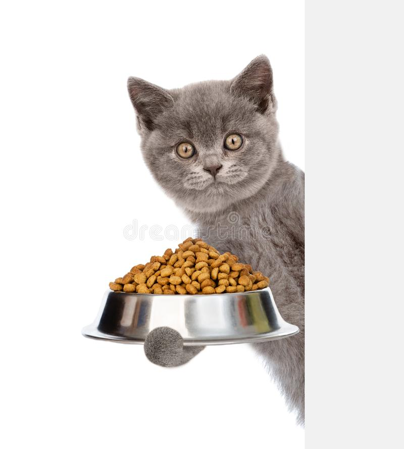 Kitten holding bowl of dry cat food and peeking from behind empty board. isolated on white background royalty free stock images