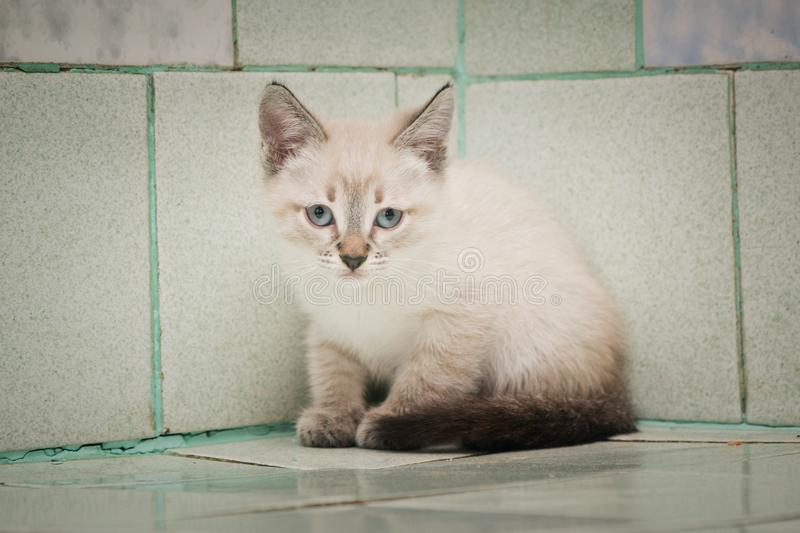 A lone wandering kitten sits on a tile in a vet hospital. royalty free stock photos