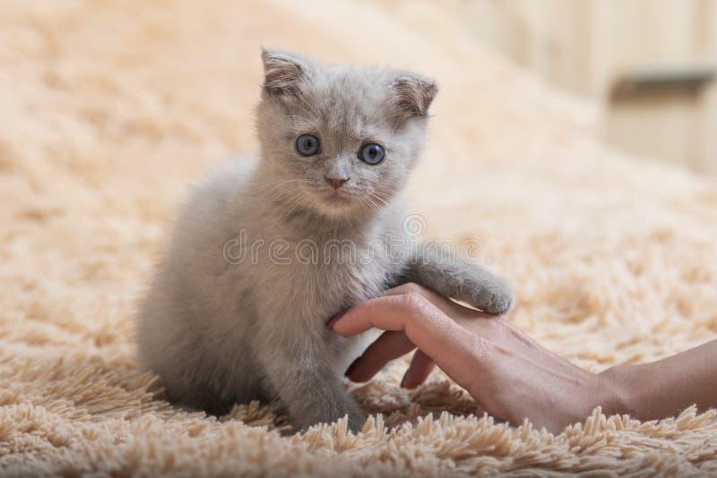 Kitten And Human Handshake imágenes de archivo libres de regalías