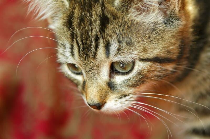 Kitten hunting stock image