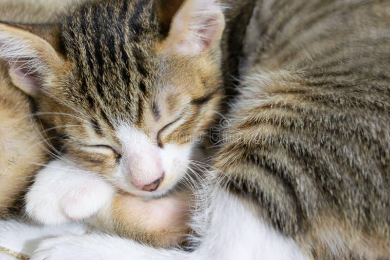 Kitten Image rayada negra durmiente linda imágenes de archivo libres de regalías