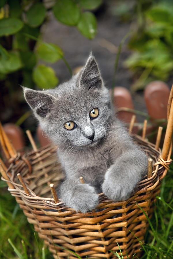 Free Kitten In A Basket Royalty Free Stock Photos - 21539128