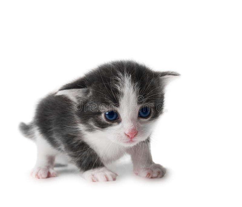 Kitten isolated stock images