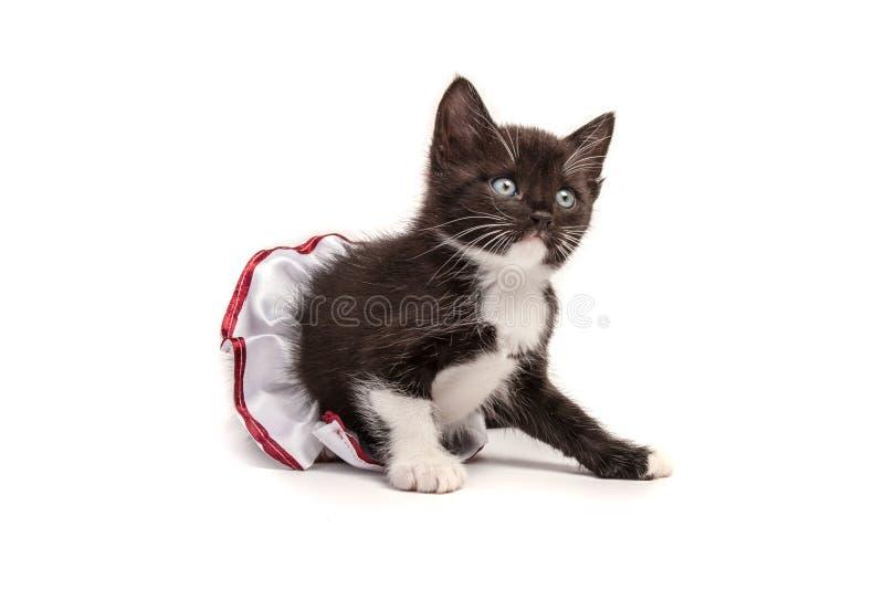 Kitten royalty free stock images