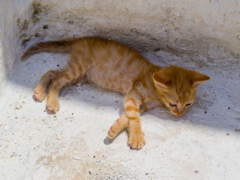Kitten Italiano fotos de stock royalty free