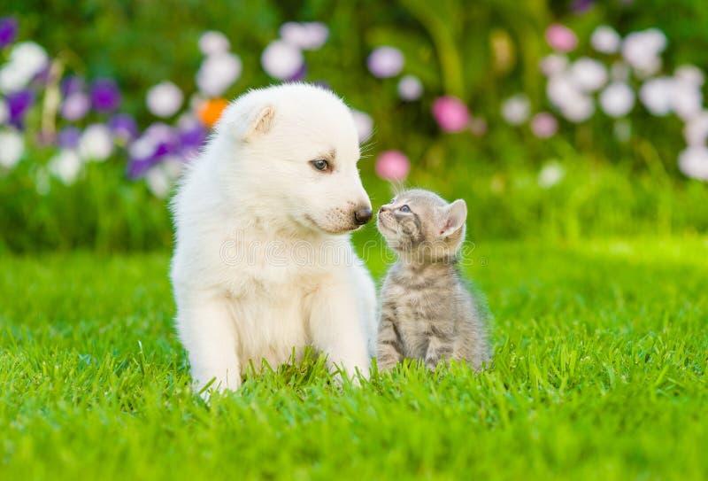 Kitten kissing White Swiss Shepherd`s puppy on green grass stock photography