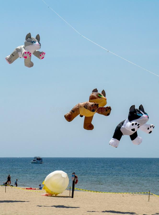 Free Kitten Kites At Grand Haven Michigan Kite Fest Royalty Free Stock Photos - 82529588