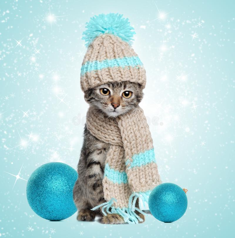 Kitten in knitted scarf and hat with christmas decorations stock photo