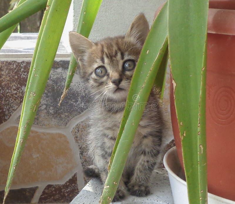 Kitten Leo photo libre de droits