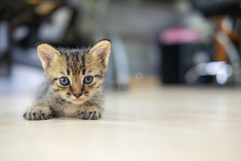 Kitten liegt auf dem Boden und sieht geradeaus lizenzfreie stockfotografie