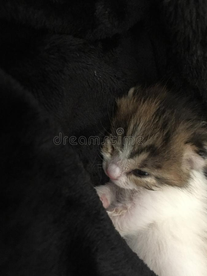Kitten, little cat, relax, amazing cat, sleeping cat. Love royalty free stock photography