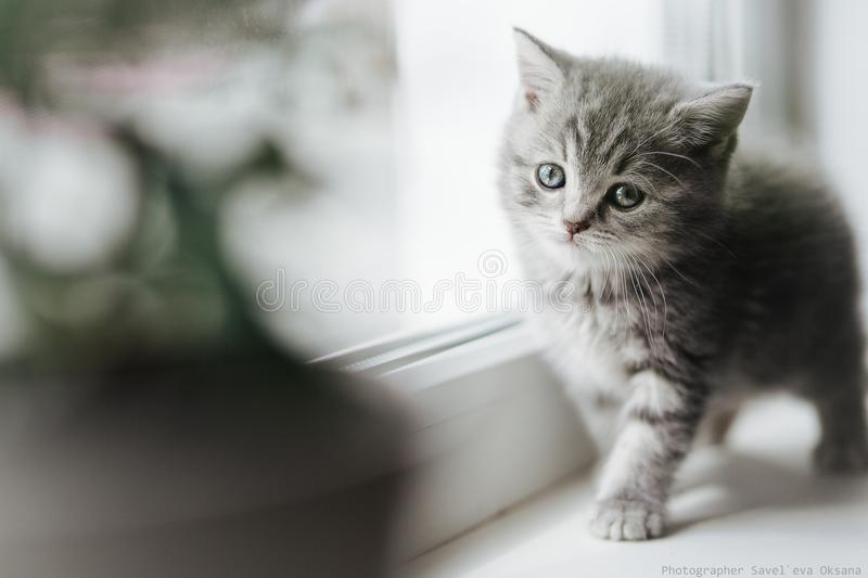 Kitten stock image