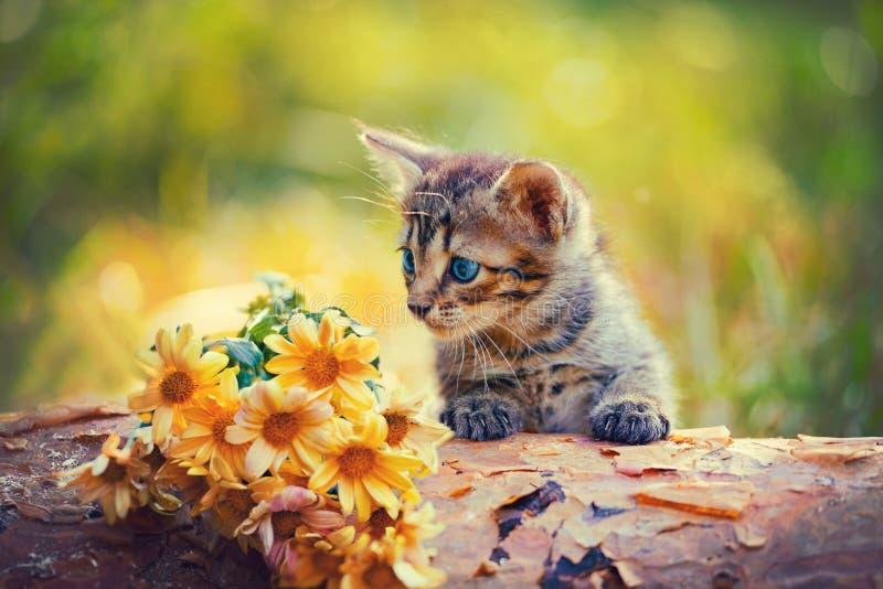 Kitten looking at flowers. Cute little kitten outdoor looking at flowers on wooden snag