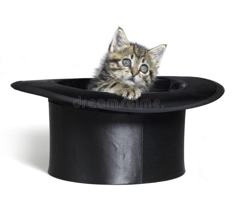 Kitten Looking Out Of A Black Top Hat Stock Photo