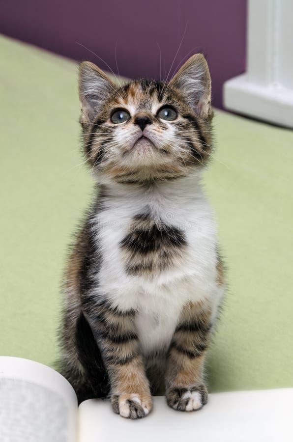 Kitten Looking Up From Book royalty-vrije stock fotografie