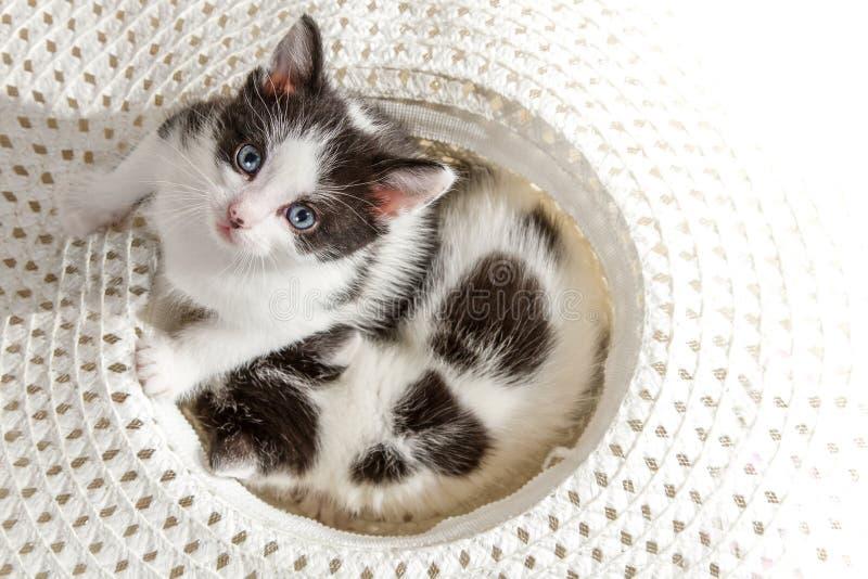 Kitten looking up at camera royalty free stock images