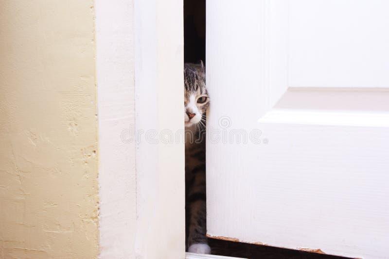 Download The Kitten Looks In The Half-open Door Stock Image - Image of door & The Kitten Looks In The Half-open Door Stock Image - Image of door ...