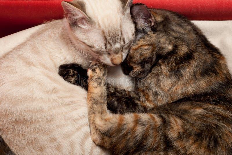 Kitten love royalty free stock images
