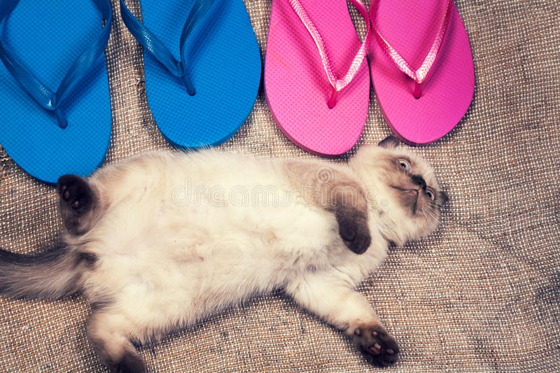 Kitten lying on the back near flip flop sandals. Summer scene. Carefree little kitten lying on the back near flip flop sandals royalty free stock photography