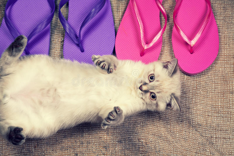 Kitten lying near flip flop sandals. Summer scene. Carefree little kitten lying on the back near flip flop sandals royalty free stock photography