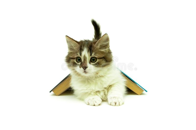 Kitten lying under a book on a white background royalty free stock photo